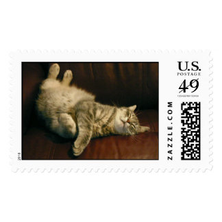 Cat nap - in the extreme stamp
