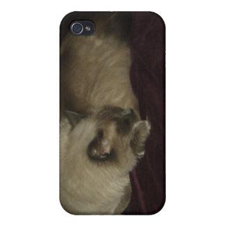Cat nap iPhone 4 cover