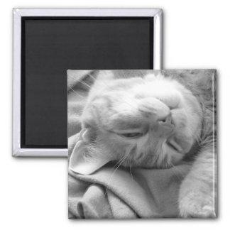 Cat Nap Magnets