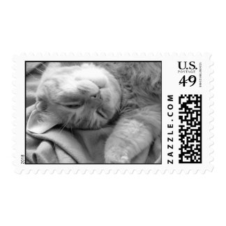 Cat Nap Postage Stamps