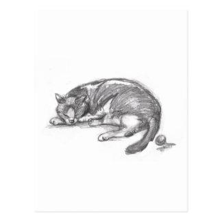Cat Nap Postcard