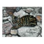 Cat Nap Postcards