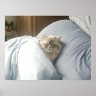 Cat Nap Poster print