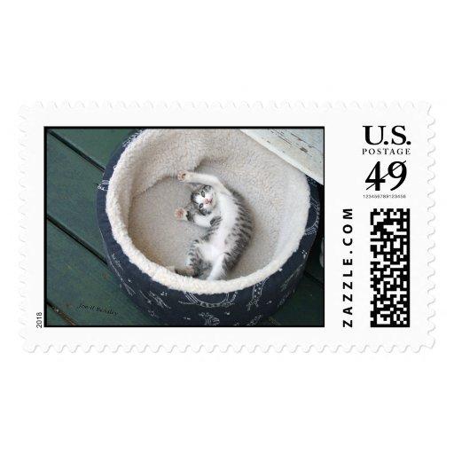 Cat Nap Stamp