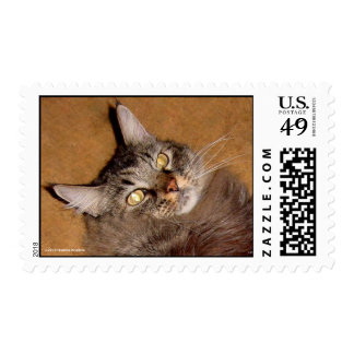 CAT NAP TIME! POSTAGE STAMPS