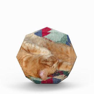 Cat Napping Acrylic Award
