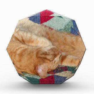 Cat Napping Award