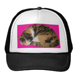 Cat Napping Hat