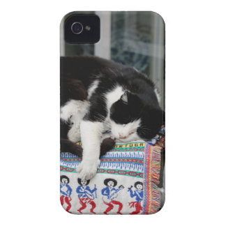 Cat napping in Portugal iPhone 4 Case-Mate Case