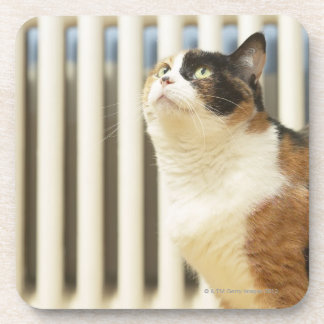 Cat next to radiator drink coasters