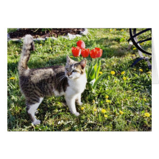 Cat Next To The Red Tulips On The Garden Greeting Cards