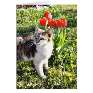 Cat Next To The Red Tulips On The Garden Card
