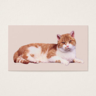 Cat Nobody's Purrfect Business Card