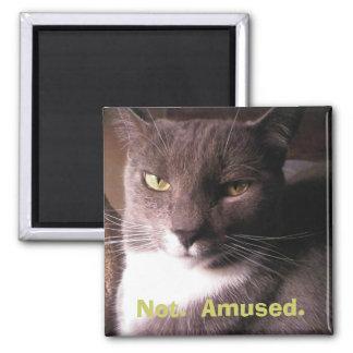 Cat:  Not Amused 2 Inch Square Magnet