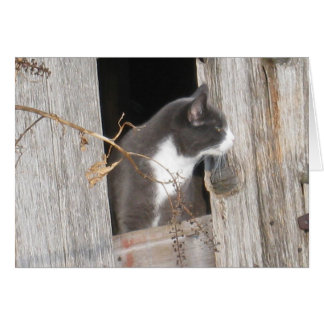 "Cat Note Card Tuxedo Cat ""Barn with a View"""
