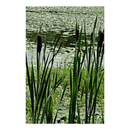 Cat O Nine Tails & White Water Lillys Photo Print