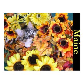 Cat, Om Nom Nom, or Leaf? Postcard