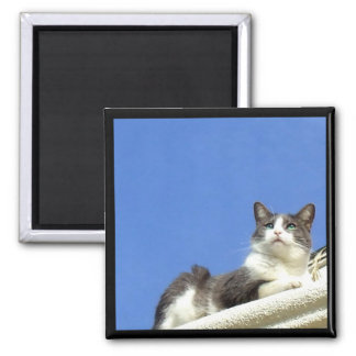 Cat on a balcony 2 inch square magnet