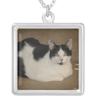Cat On A Couch Jewelry