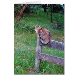 Cat on a Fencepost Card