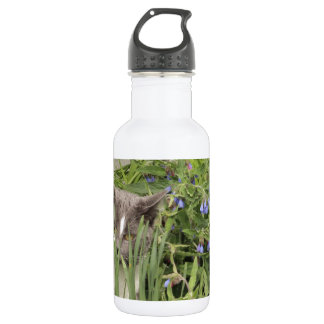 Cat on a hot bed of flowers stainless steel water bottle