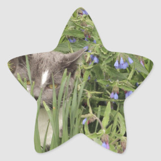 Cat on a hot bed of flowers star sticker