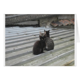 Cat on a Hot Tin Roof Card