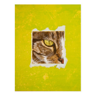 Cat on a piece of paper postcard
