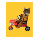Cat On A Tractor Postcard