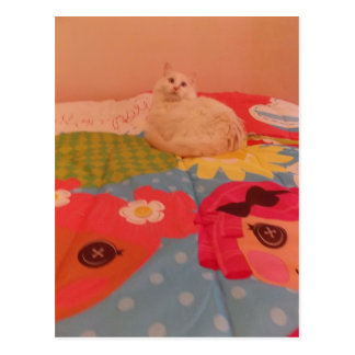cat on bed postcard