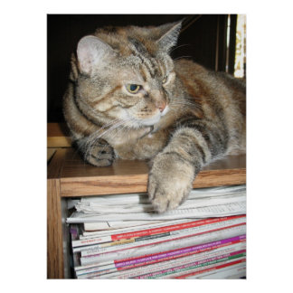 cat on bookshelf posters