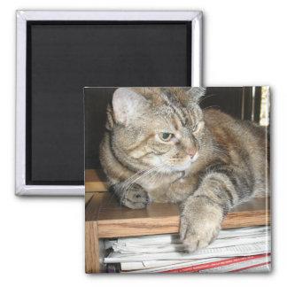 cat on bookshelf refrigerator magnet
