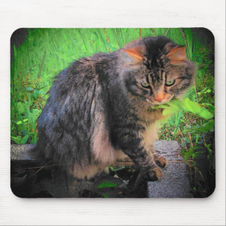 Cat on bricks mouse pad