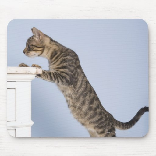 Cat on Chair, Dusseldorf, North Mouse Pad