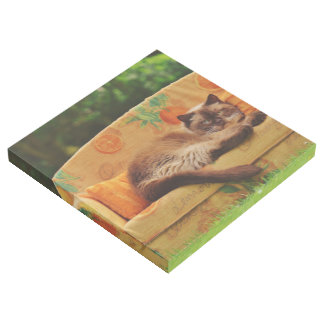 Cat On Couch Gallery Wrap