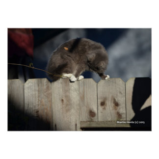 Cat on Fence (10) Poster