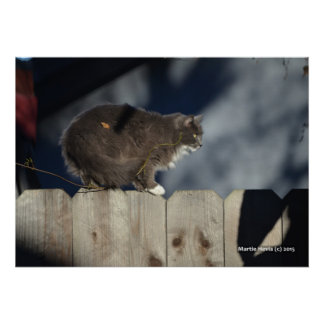 Cat on Fence (12) Poster