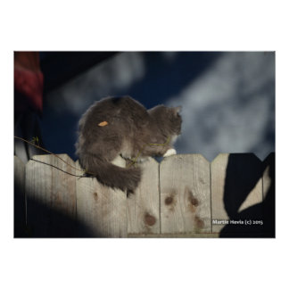 Cat on Fence (15) Poster