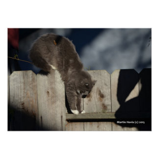 Cat on Fence (6) Poster