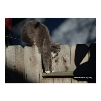 Cat on Fence (7) Poster