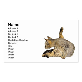 "Cat on ""Give me 5"" Pose Business Card"