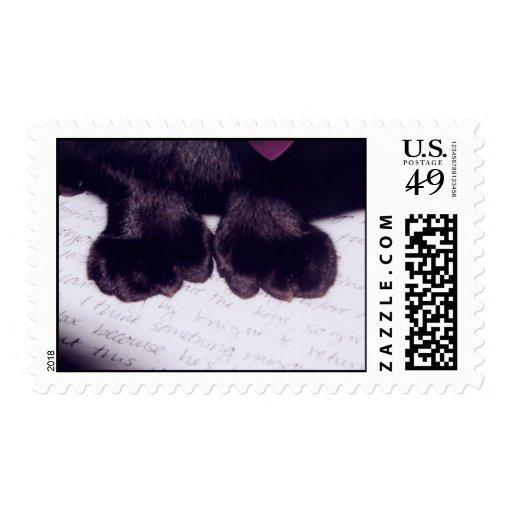 Cat on Letter Stamp