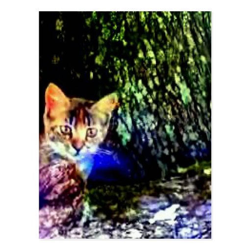 Cat on Oak Roots Post Cards
