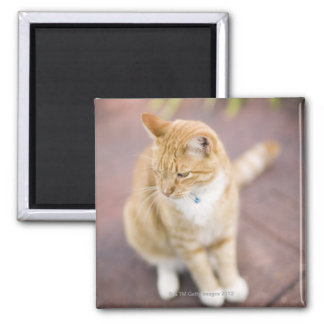 Cat on path to home, close-up (focus on head) 2 inch square magnet