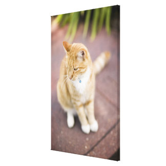 Cat on path to home, close-up (focus on head) canvas print
