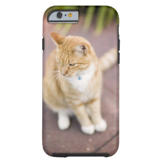 Cat on path to home, close-up (focus on head) tough iPhone 6 case