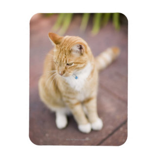 Cat on path to home, close-up (focus on head) rectangular photo magnet