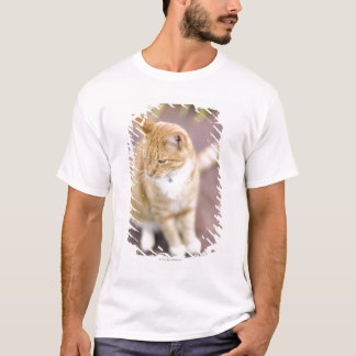 Cat on path to home, close-up (focus on head) T-Shirt