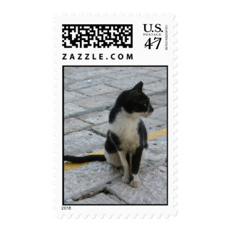 Cat on pavement postage