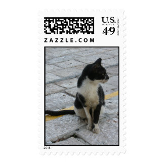 Cat on pavement stamps